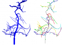 This dataset provides code for performing curve skeletonization of noisy objects.  Left: original object.  Right: result.
